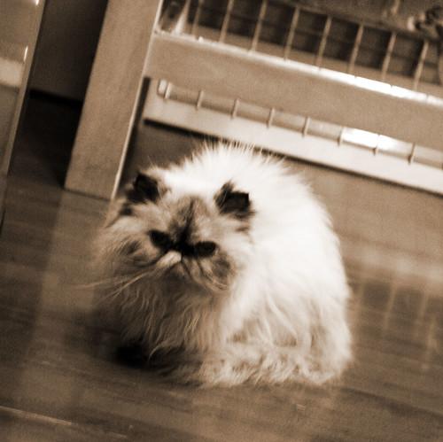 Loft walk kitty