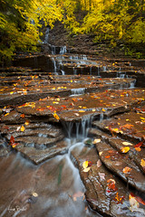 autumn trickle ([Adam Baker]) Tags: autumn cascade trickle ithaca ny trees buttermilkfalls statepark creek foliage gorge orange yellow green hiking outdoors nature portrait landscape canon 5dmarkii 1740l cpl adambaker