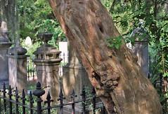 Solace (Fiddling Bob) Tags: nature emerson graveyards charleston charlestonsc transcendentalism charlestonunitarianchurch