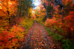 The Trail's on Fire!: Explored (Boreal Photography) Tags: autumn landscape foliage boreal grandportage