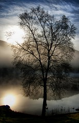 Black tree (Arnfinn Lie, Norway) Tags: mist tree nature water norway tre rogaland wow1 wow2 wow3 wow4 bealive wow5 betop carlzeiss1680mm sonyalpha350 beseven mygearandmepremium arnfinnlie carlzeisslover artistoftheyearlevel3 artistoftheyearlevel4 ginordic1 artistoftheyearlevel5