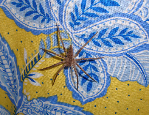 Spider on Curtain