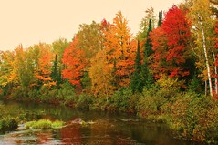 Fall on the Shore (chumlee10) Tags: autumn trees color reflection fall wisconsin reflections sony mercer wi a300 ironcounty