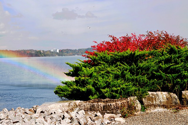 rainbow meets burning bush