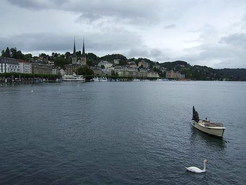 boat and swan on Lake Lucerne in Switzerland