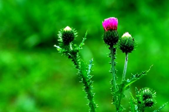 Jiuzhaigou flower23
