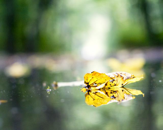 32/365 : leaf