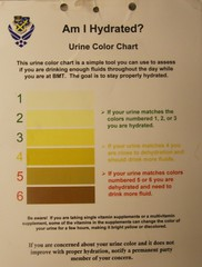 Am I hydrated? (baltic_86 (mostly off)) Tags: sanantonio texas military dorm airforce bootcamp bulldogs trainee lackland hydrated urinecolorchart baltic86 graduation62510 bootcamplackland 326438