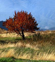 Sierra Nevada, Spain (HisGlitteringEye) Tags: mountain spain orchard sierranevada hisglitteringeye