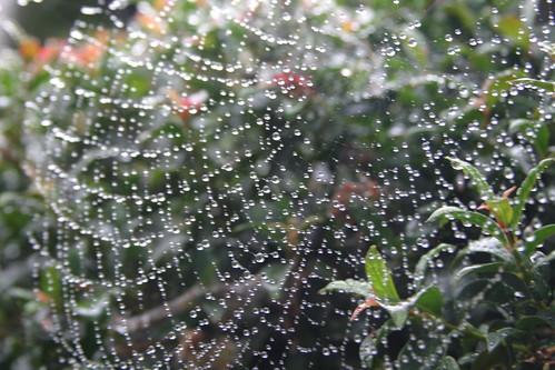 rain webs 010