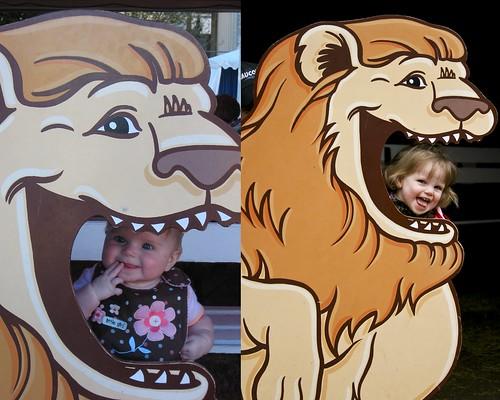 Lion comparison