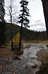 The creek flowing into the river (Photography Through Tania's Eyes) Tags: bridge autumn trees canada water leaves pine creek table photo nikon rocks picnic photographer crossing bc britishcolumbia picture reststop photograph rockymountains flowing copyrightimages gazibos taniasimpson eastkootneyregion