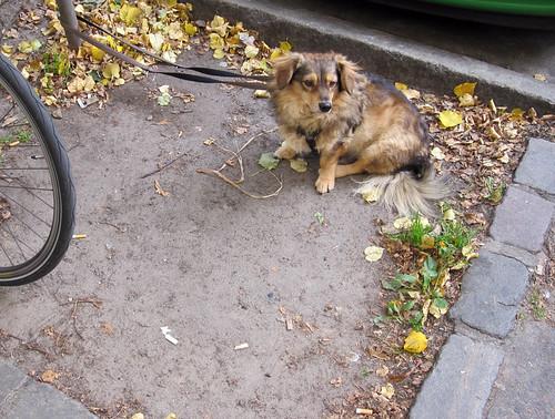 Wartender Hund IV