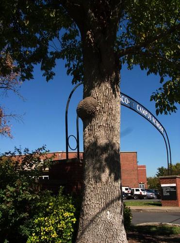 Tree Gall