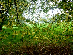 Underneath the branches 1 (helenoftheways) Tags: autumn trees leaves lewisham auras mountsfieldpark