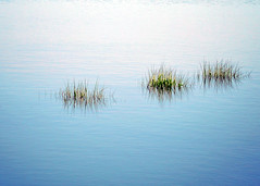 A New Day (Mary Vican) Tags: bridge blue green beach nature water grass landscape capecod massachusetts dunes scenic surface coastal shore greenery dreamy grasses marsh ripples bluff wellfleet protected watery