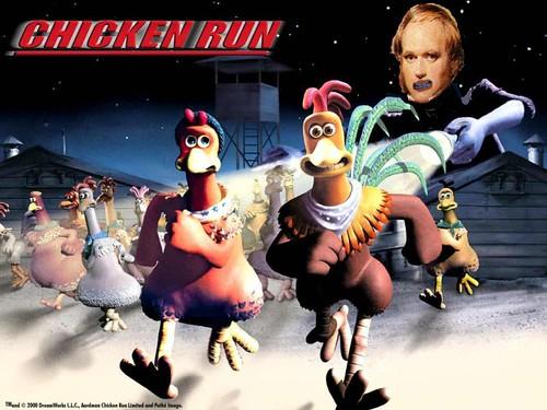 Darwin e a fuga das galinhas