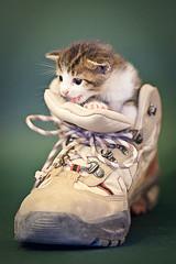 miaaaaauuuuuu!!! (Juan Antonio Cap) Tags: pet animal cat kat feline chat pussy kitty gato felino katze mace  gatto  mascota kot gat koka kedi ohhh descanso gatito kissa kttur maka kucing pusa mo moix   kitti  minino    pisic   colorphotoaward canoneos5dmarkii