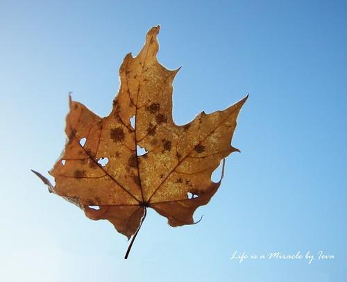 Frosty autumn/ apšerkšnijęs ruduo
