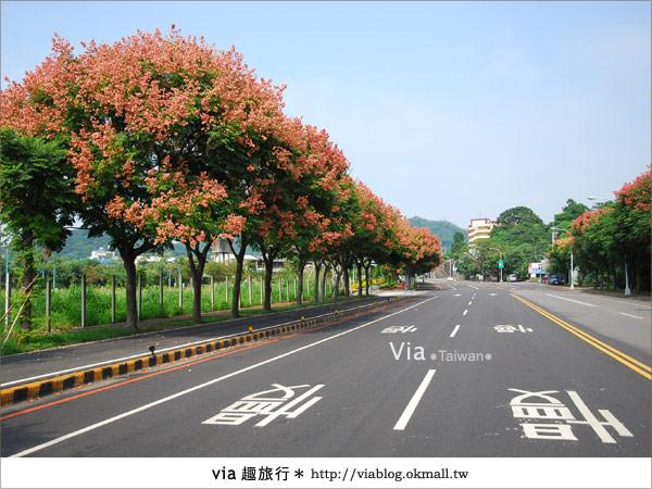 【台中】台灣秋天最美的街道!台中大坑發現美麗的台灣欒樹19