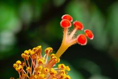 Androceo & Gineceo (Fabricio Micheli) Tags: flower macro micro nikkor gineceo androceo nikkor105mmf28gvrmicro