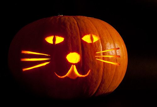 Pumpkin Cat 1