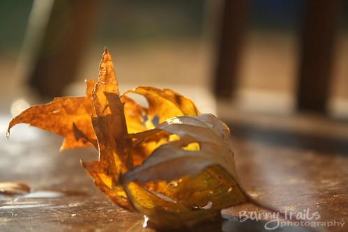 282-curled leaf
