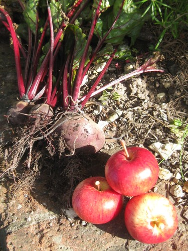 Homegrown beetroot and apples