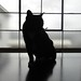 Cat in Sillouette on Kitchen Counter