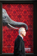 head measurement (5ERG10) Tags: head elephant trunk billboard hoarding red dave tv advert walking passerby moment elefante proboscide passante 2010 autumn london londra saturday england uk britain great united kingdom testa moustache coat sergio amiti 5erg10 nikon d300 nikkor 18200mm portland street tusk zanna grey black frame pubblicita cartellone pubblicitario fitzrovia photography humour capture measuring sizing measurement earphones auricolari listening waiting patience humor