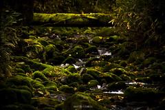 Bridge in autumn #1 (earth-tronic) Tags: bridge autumn light color tree green nature water canon river mywinners