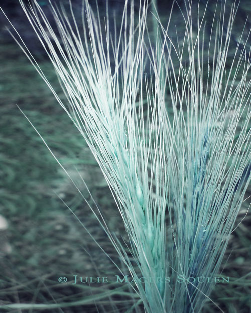A tuft of grass bursts into a fountain of aqua color.