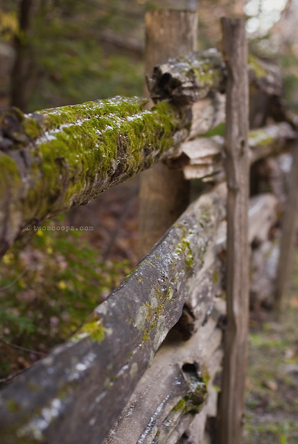 mossy fence 295/365