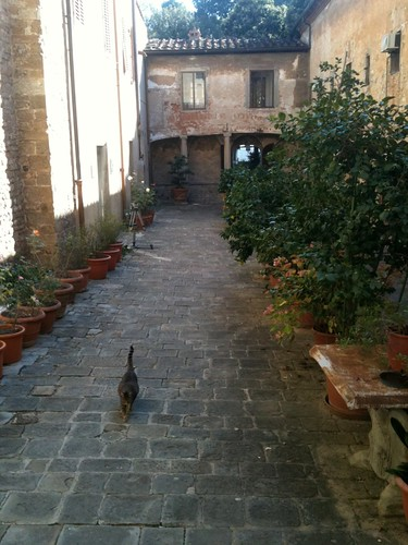S Croce courtyard with cat