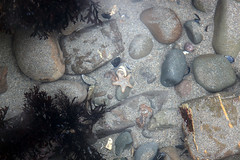 Starfish (Matt.Cas) Tags: ocean sea sky sunlight nature water stone clouds reflections landscape sand rocks starfish wildlife sealife cliffs beaches naturalworld northdevon widemouthbay beachphotography
