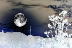 divagazioni oniriche (dediraspi) Tags: art call what nights thats now 1001 i