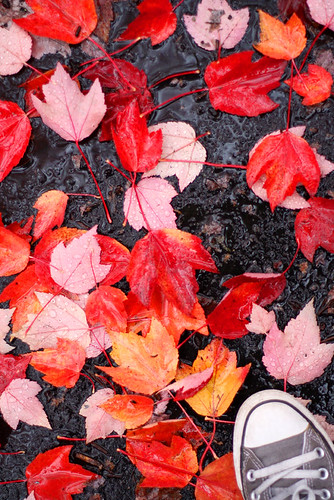Red Leaves, Take Two....
