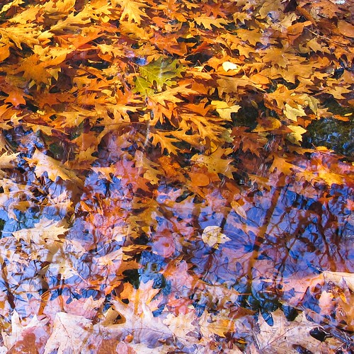 Reflections on Fall