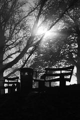 Stark Park (ReportageImages) Tags: park leica morning england mist fog dawn bath rangefinder somerset m8 summilux daybreak 75mm
