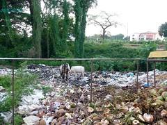 Bambolim Opp GMC Hospital (joegoauk33) Tags: road garbage highway goa rubbish household stinks bambolim joegoauk nh17