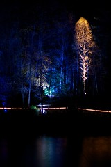 Enchanted Forest 28/45 (itmpa) Tags: wood trees light tree slr night forest photoshop canon dark scotland no perthshire lit enchanted enchantedforest pitlochry unedited 30d straightfromcamera faskally canon30d faskallywood lochdunmore lightingshow bigtreecountry tomparnell itmpa archhist