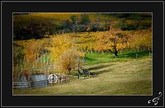Autumn in South Tyrol (bigmike.it) Tags: autumn trees fall colors yellow alberi pond giallo autunno colori stagno vanagram mygearandmepremium mygearandmebronze mygearandmesilver