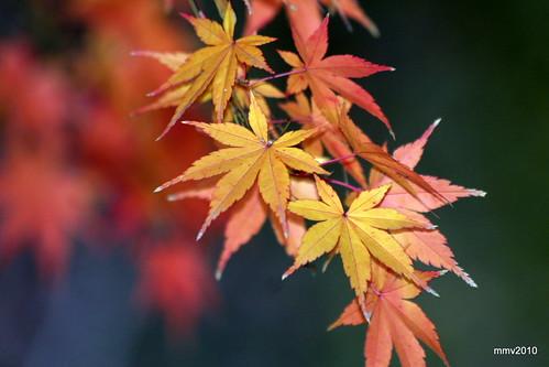 un poco más de otoño 25-11-2010 18-34-10