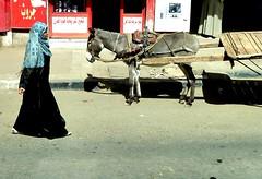 The lady and the dunkey (sara77_zid) Tags: life africa street woman lady donna sara strada egypt nile egitto vita 2010 asino nilo dunkey 5photosaday