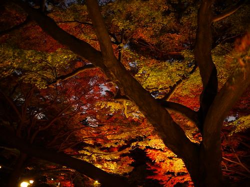 庭園美術館・紅葉