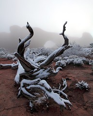 Dead Tree, Snowy Morning At Windows - Arches National Park, Utah (Brian Callahan (Luxgnos.com)) Tags: windows cloud mist snow fog deadtree redrocks archesnationalpark wonderland soe wow1 greatphotographers briancallahan platinumpeaceaward shinsanbc mygearandmepremium mygearandmebronze mygearandmesilver mygearandmegold mygearandmeplatinum mygearandmediamond ringexcellence luxgnosphotography luxgnosis wwwluxgnoscom