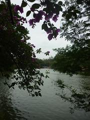 É primavera na Redenção! (7) (Vagner Eifler) Tags: flores brasil natureza flor portoalegre redenção parquefarroupilha riograndedosul