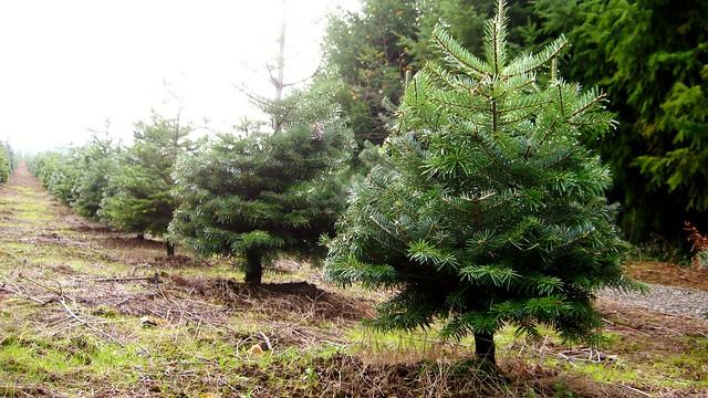 2010-11-28 trees 014