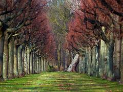 wilde allee (~janne) Tags: tree berlin nature natur olympus gras schloss bäume baum f28 schlosspark charlottenburg 135mm janusz elmaritr e520 ziob