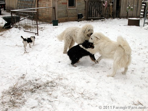 Dogs Playing in the Snow 6